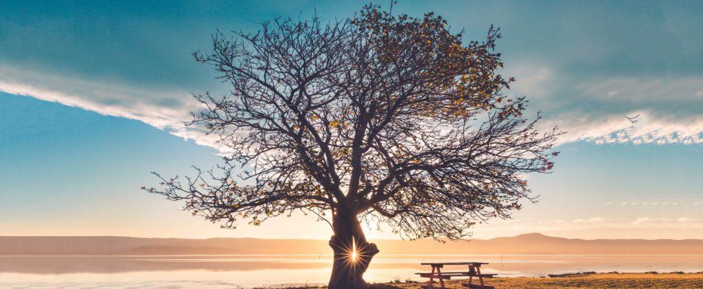What is mindfulness   emindful.com